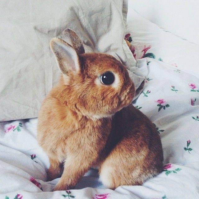 soy un conejo